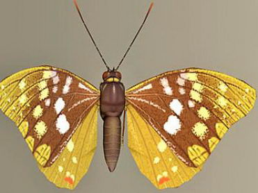 Palabras claves: belleza, belleza, mariposa, 3D, el modelo